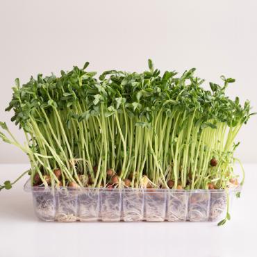 Studentrabatt på 15 % till alla med Studentkortet som handlar hos odla.nu. Hitta mängder av frön och växter! Hämta rabatten!